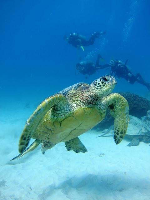 Hawaii Scuba/snorkel Tours Business
