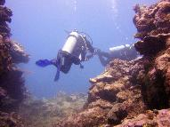 Dive Center for sale - PADI 5 Star Dive Resort, Fiji Islands