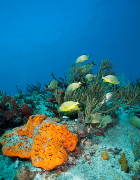 Dive Center For Sale - Dive Center in Playa del Carmen for Sale! - REDUCED PRICE -  PRICED TO SELL