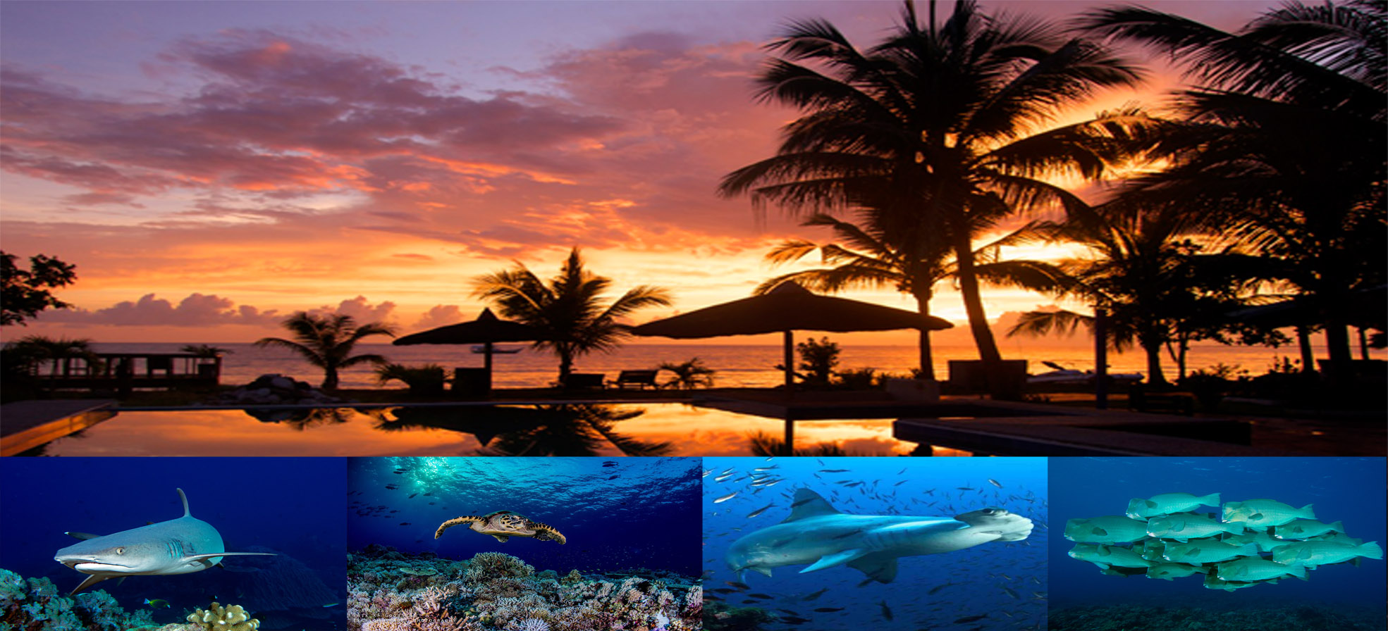Dive Center For Sale - beach and dive resort in the philippines for sale